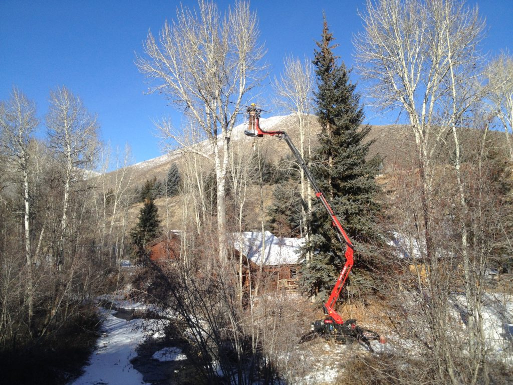 pruning a cottonwood near a house with the t-lift