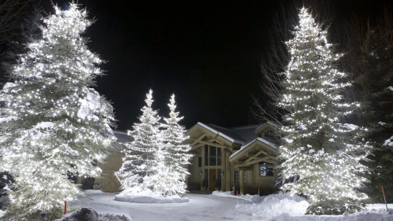 holiday lights in spruce trees at the front of the house at night