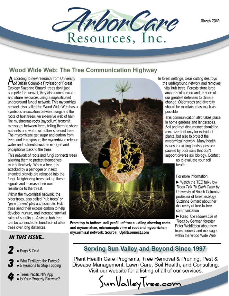 screenshot of 2019 annual arborcare resources newsletter